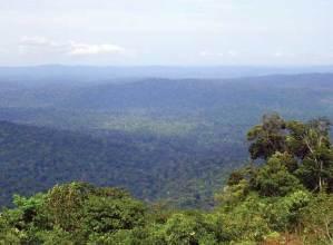 selva guayana- amazonica